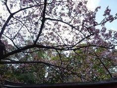"""""""Shougetsuin""""(Tempio), Ito, Izu(Shizuoka), Japan"""