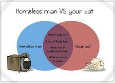 Homeless man vs cat