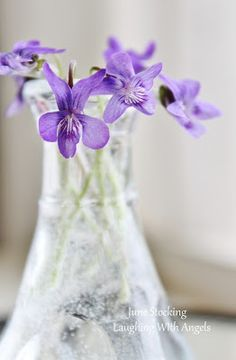 Belinda's internet connection is down.  She apologizes for not being able to answer messages and comments right now. Let's do Violets and Pansies next.  Thank you, ladies, for pinning with us ♥