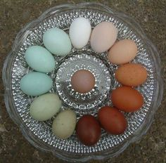 Chicken egg color dreams...This time around, it looks as though we have dark-ish brown, light brown, a pink(!), a cream(?) and two blue-green-ish eggs in our basket! Not too shabby at all! :D