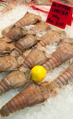 Slipper lobster for sale at a Chinese market in Kota Kinabalu, Sabah, in Borneo. We had one of many great meals here.