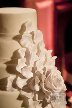white rose and petals on white wedding cake