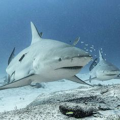 Looking forward to this beauty's! Shark Diving, Ocean Life, Whale, Mexico, Adventure, Photo And Video, Lifestyle, Videos, Animals