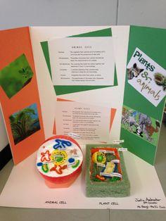 3D Plant & Animal Cell Project Deborah Gangi-Hall McKinley School K-8 Pasadena, CA