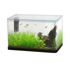 Aquarium avec une capacité de 20 L.  Équipé d'un filtre, 1 kg de gravier et une d'une plante. (Vendu sans poissons, ni décors.)