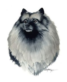 keeshond art print signed by watercolor artist dj rogers