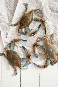 Blue Claw Crabs (raw ... little bit haw'n salt ... ono! ... da best!)