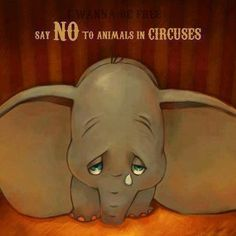 I hate circuses with animals!!