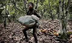 As 7 Marcas de Chocolate que Utilizam Trabalho Escravo Infantil 7 chocolate brands that use slave children work- Chocolates, Chocolate Company, Chocolate Brands, Cheap Chocolate, Human Trafficking, In Law Suite, Working With Children, Poor Children, Ivoire