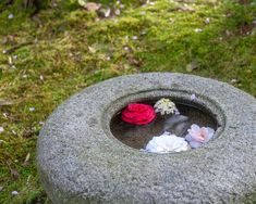 Tranquil, inspirational scene in a Japanese, zen garden. Camellia Flowers float in a Tsukubai, a stone water basin, surrounded by a bed of moss. This inspirational art is the perfect wall decor to han Minimalist Japan, Minimalist House Design, Small Japanese Garden, Japanese Garden Design, Moss Garden, Garden Stones, Meditation Garden, Meditation Space, Winter Garden