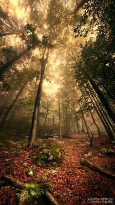 """Vertical Forest"" by sachtikus.deviantart.com on @deviantART"