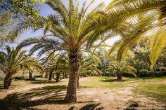 Fotos: Isaias Mena - Ajuntament de Tarragona Florida, Plants, Pictures, Park, The Florida, Plant, Planets