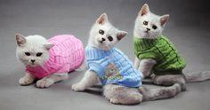 Cat Dog Spagetti quente de outono inverno Cat Dog Pet Jumper de cão gato gato roupas para animais de estimação em Roupas de gato de Casa & jardim no AliExpress.com | Alibaba Group