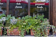 Decorative, edible planting in  widow boxes in front of a gourmet foods store window on a busy urban street.