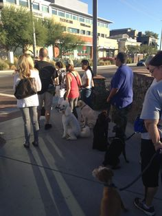 Urban Canine Good Citizen Training Good Citizen, The Right Stuff, Dog Runs, Fleas, Dog Training, Sports Dog, Urban, Raising, Dogs