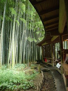Bamboo garden at Hokokuji Temple in Kamakura, Japan