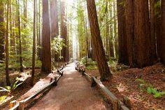 Best hikes in the bay area for viewing redwoods. http://www.7x7.com/play/bay-area-s-best-redwood-hikes