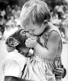 monkey love | chimp | friends | best friends | black  white | photography | vintage | pet |