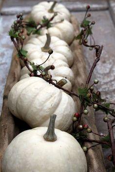 weiße Kürbisse auf einem Brett oder auf Baumrinde, evtl. noch Moos dazu und einige kleine Äste