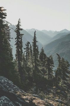 Trees, mountains