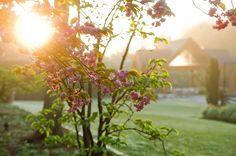 Janice Parker Landscape Architects, established in is a premier landscape architecture firm servicing New York City, the Hamptons and Connecticut. Kips Bay Showhouse, Hedges, Landscape Architecture, The Hamptons, City, Garden, Plants, Outdoor, Outdoors