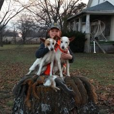 Nationally-known Gray Line of Mountain Feist. Specializing in squirrel hunting dogs but the breed excels at pursuing a variety of game. Squirrel Hunting, Hunting Dogs, Mountain Feist, Goats, Fishing, Outdoors, Animals, Outdoor Rooms, Off Grid
