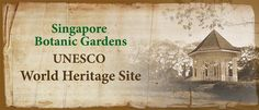 Singapore Botanic Gardens - free and beautiful with orchid garden and cafes for rest