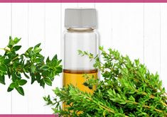Thyme – Health Benefits Thyme Benefits, Health Benefits, Flaxseed Oil For Hair, Black Spots On Skin, Rid Of Bed Bugs, Oil For Hair Loss, Essential Oils For Hair, Hair Oil, Modern House Design