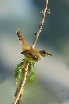 Mengintai Mangsa - 10Nature | The Best Nature Photography