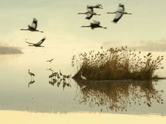 nationalgeo:  Rest Stop Photograph by Gal Gross http://photography.nationalgeographic.com/photography/photo-of-the-day/israel-lake-cranes/