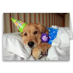 Golden Retriever Birthday Card! Ever been tired after a long day celebrating your birthday? This card features a photograph of a cute golden retriever dog tucked into bed, while wearing pajamas and a party hat and holding his teddy bear. Time for sleep!