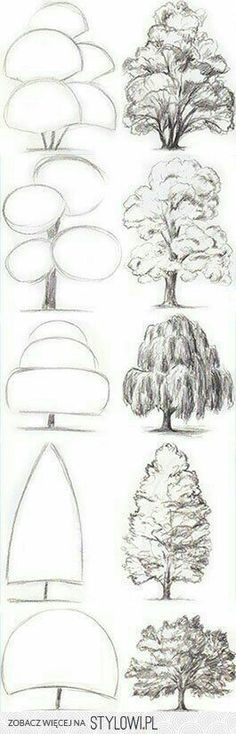 Drawing Tips Tree Drawing Tutorial. Start with basic geometric shapes. Drawing Techniques, Drawing Tips, Painting & Drawing, Drawing Ideas, Sketch Ideas, Sketching Tips, Trees Drawing Tutorial, Learn Drawing, Drawing Drawing