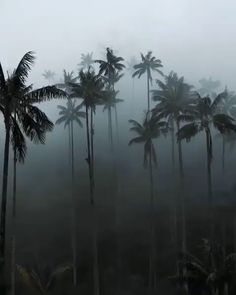 Fog engulfed palm trees in Valle de Cocora, Colombia Video by – All Pictures Beautiful Nature Scenes, Beautiful Nature Wallpaper, Amazing Nature, Beautiful Landscapes, Beautiful Images, Canon Photography, Nature Photography, Photography Photos, Lifestyle Photography