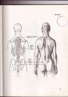 anatomia artistica - dibujo anatómico de la figura humana.pdf   Anatomía   Ciencias de la tierra y de la vida Human Skeleton Anatomy, Human Anatomy Art, Anatomy For Artists, Body Anatomy, Human Figure Drawing, Figure Drawing Reference, Anatomy Reference, Anatomy Sketches, Anatomy Drawing