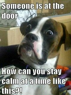 Rotflmao...so my brindle boxer!!!