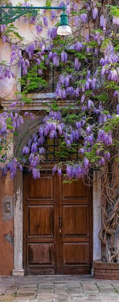 decked in wisteria