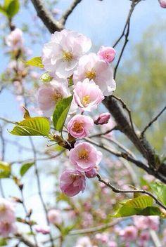 ** spring