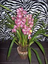 Kwiaty doniczkowe - kwitnące