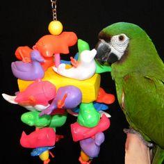 Junior FunPlastic Severe Macaw Parrot Toy