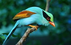 Creator Created Birds and SAID, DO YOU NOT SEE HOW I HAVE CREATED BIRDS? WOULD YOU NOT THEN BELIEVE?