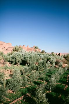Field in Ait Benhaddou | photography by http://www.sasithonphotography.com/