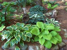 Love the old metal wheel - with a variety of Hosta - perfect for the shade garden.....