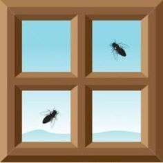 Learn How To Get Rid Of Flies Outdoors Indoors Here We Will See