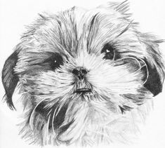 seeing eye dog coloring pages | Shih tzu, To draw and Draw on Pinterest