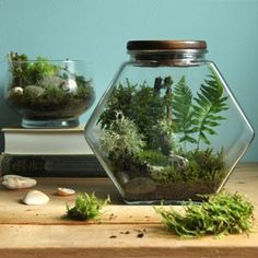 How to make a terrarium easily that stays healthy with no maintenance. Beautiful DIY terrarium ideas on best plants & care tips for open & closed terrariums. Terrarium Diy, Terrarium Closed, How To Make Terrariums, Regrow Vegetables, Herb Garden In Kitchen, Cold Frame, Diy Greenhouse, Exotic Plants, Cactus Flower