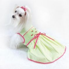 Watermelon Hand-Smocked Sun Dress Maltese Dogs, Dogs And Puppies, Dog Things, Love S, Smocking, Watermelon, Children, Kids, Baby Shoes
