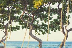 White Orchid Garlands Hanging from Trees, Flowers by Heidi, Four Seasons Resort Hualalai Weddings Hawaiian Wedding Flowers, Hawaii Wedding, Maui Weddings, Island Weddings, Hanging Orchid, White Orchids, Big Island, Garlands, Four Seasons