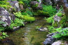 京都南禅寺大寧軒の池と苔と石