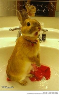 """For anyone interested in seeing a startled rabbit in a sink, here's a startled rabbit in a sink…"""