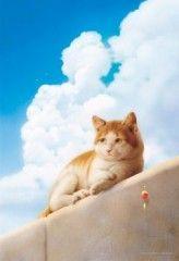 Quayside cat Makoto Muramatsu